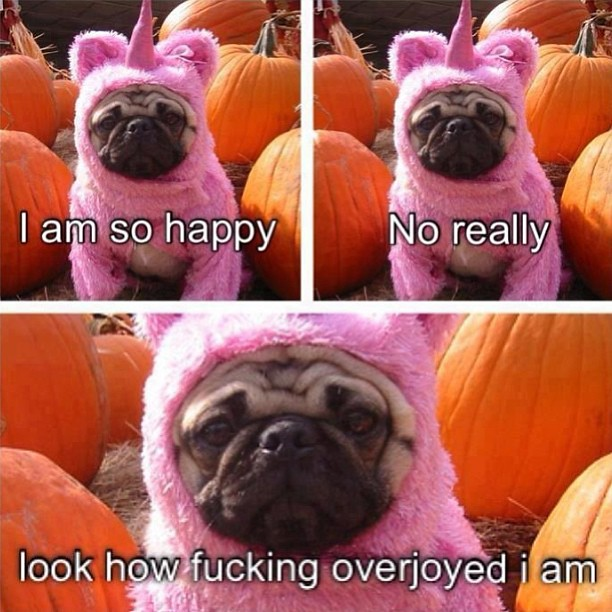 ... #pug #costume #pumpkins #pink #dog #unicorn #happy & cute #pug #costume #pumpkins #pink #dog #unicorn #happy #u2026 | Flickr