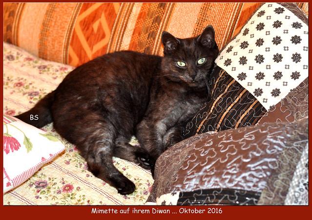 Katze Mimette 2016 ... Fotos: Brigitte Stolle