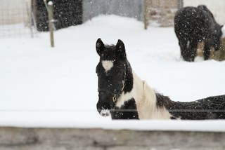 snow horse | by reading my tea leaves
