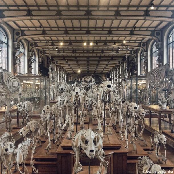 Danse macabre au mus e de l 39 histoire danse macabre for Histoire macabre