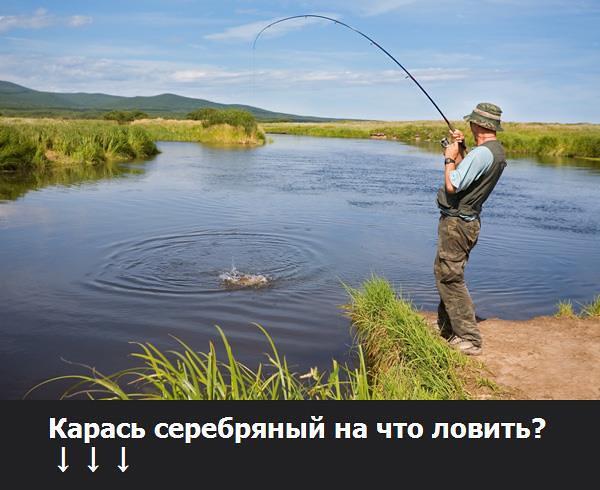 какую рыбу можно ловить в крыму