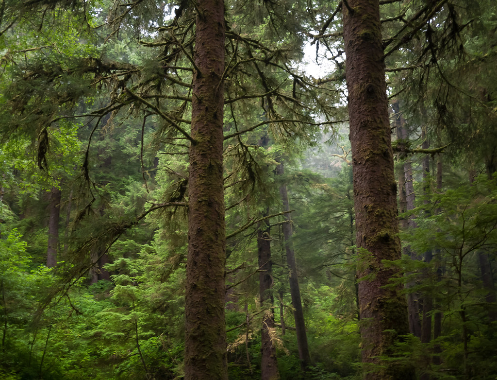 Rock Creek Wilderness | This is a small wilderness area ...