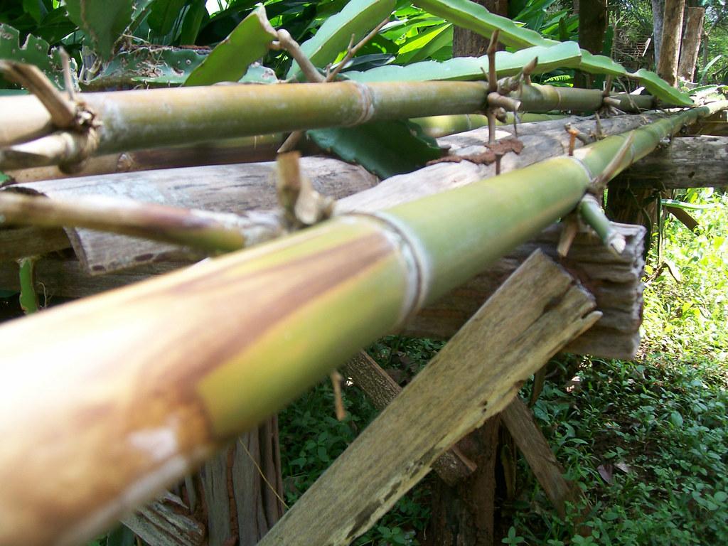 Bambus Leitung Eine Wasserleitung Aus Bambusrohren Bestbambus