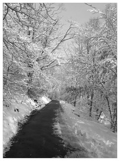 Snowy path | by stevegarfield