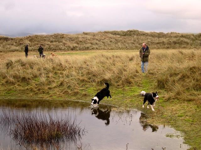 Dogs Aberystwyth Beach