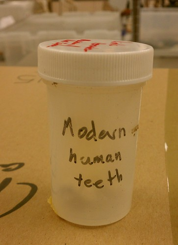 HUMAN TEETH! | by Houston Museum of Natural Science