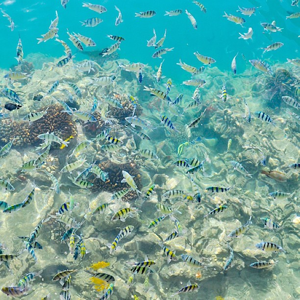 Tropical Fishes Aloha Tower Oahu Hawaii Fish Marine