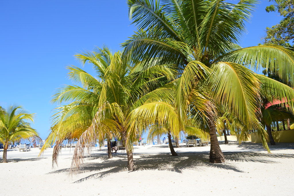 palm trees on the beach in the port of labadee haiti flickr
