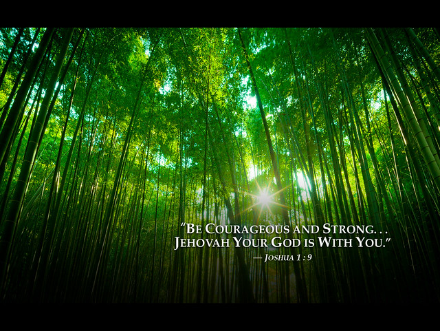 Bambooforest 2013 Jehovah Witnesses Yeartext For Ipad