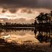Pine Glades Panorama