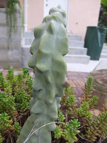 cactus with tiny arm | by GreenFrieda