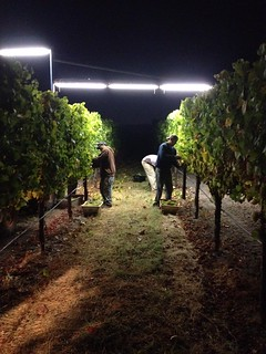 Jordan 2012 Chardonnay night harvest | by jordanwinery.com