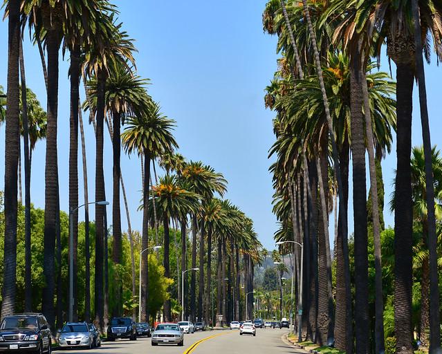 Avenida de Palmeras de Los Angeles en la Costa Oeste de Estados Unidos