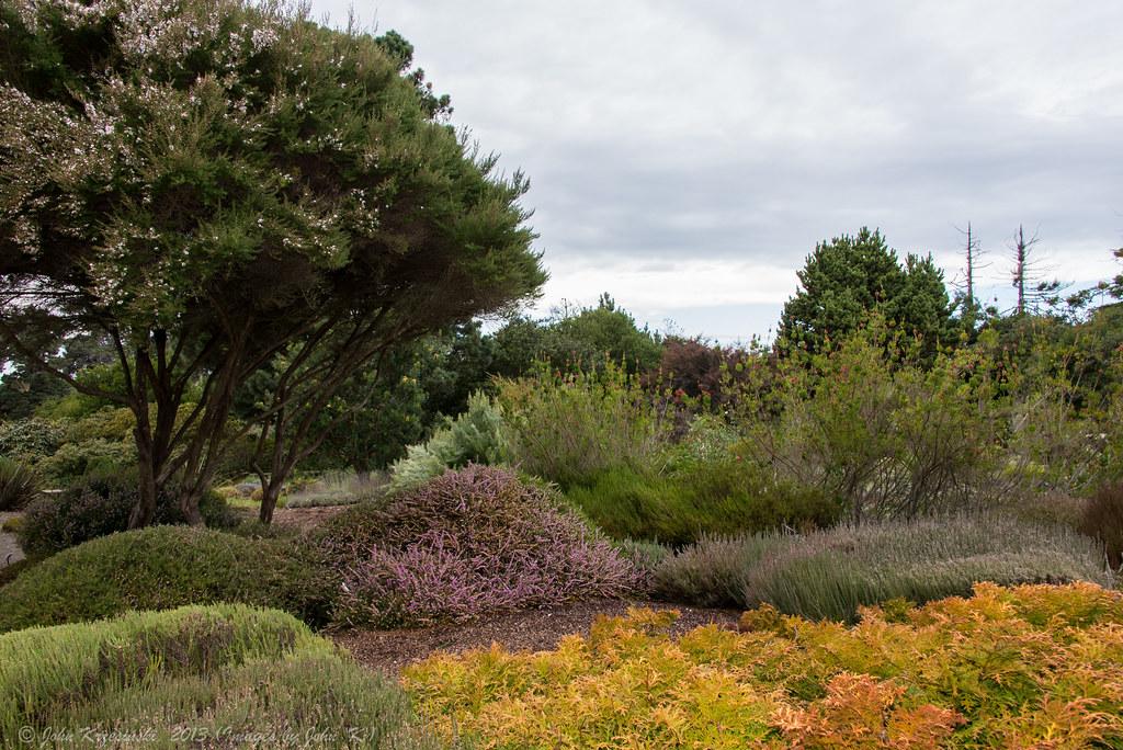 At The Mendocino Coast Botanical Gardens Winter At The