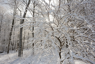 Winter Wonderland on Maple HIll | by goingslowly