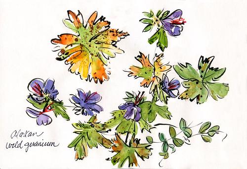 Alaska: wild geranium