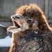 Scary camel