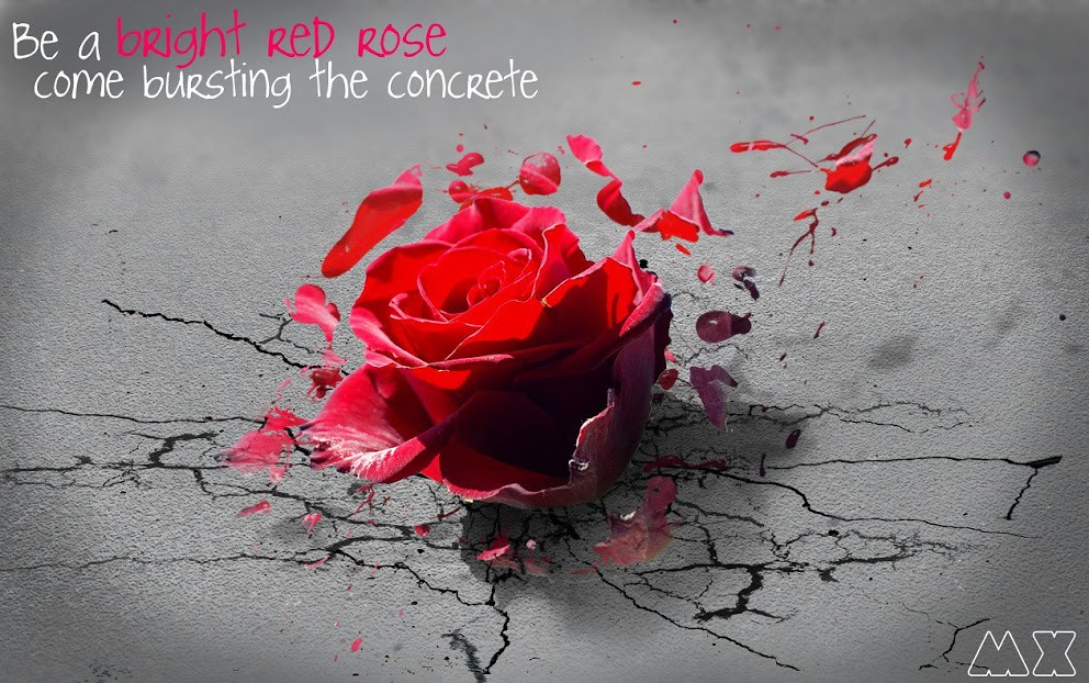 Be A Bright Red Rose Come Bursting The Concrete Be A