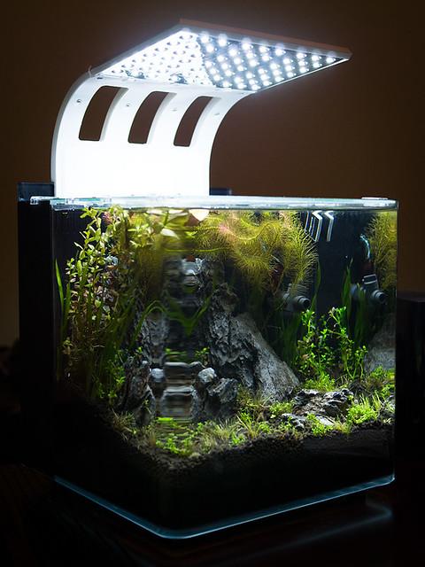 Planted betta fish tank flickr photo sharing for Fish tank camera