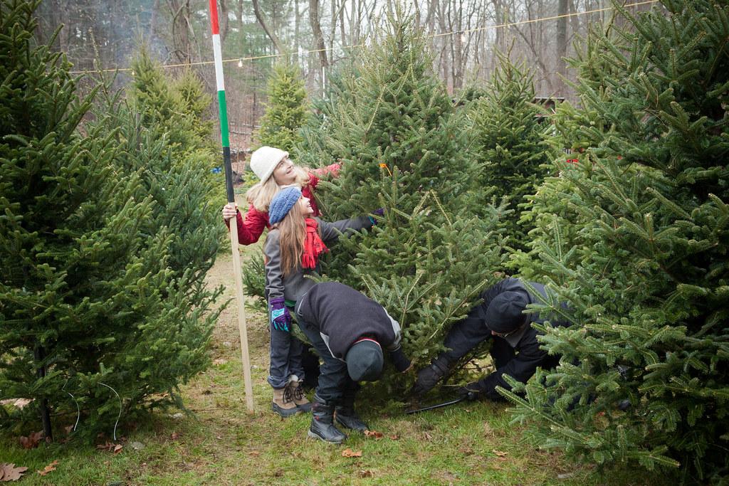Christmas Tree Far