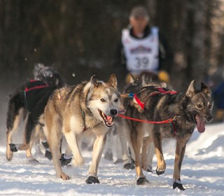 Rudy Demoski Sr's dog team | by Alaskan Dude