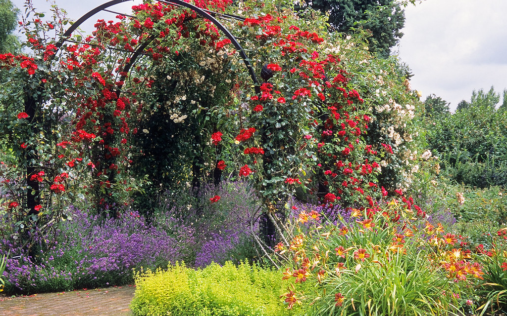 ... Royal National Rose Society Gardens   RNRS   The Gardens Of The Rose,  Hertfordshire,