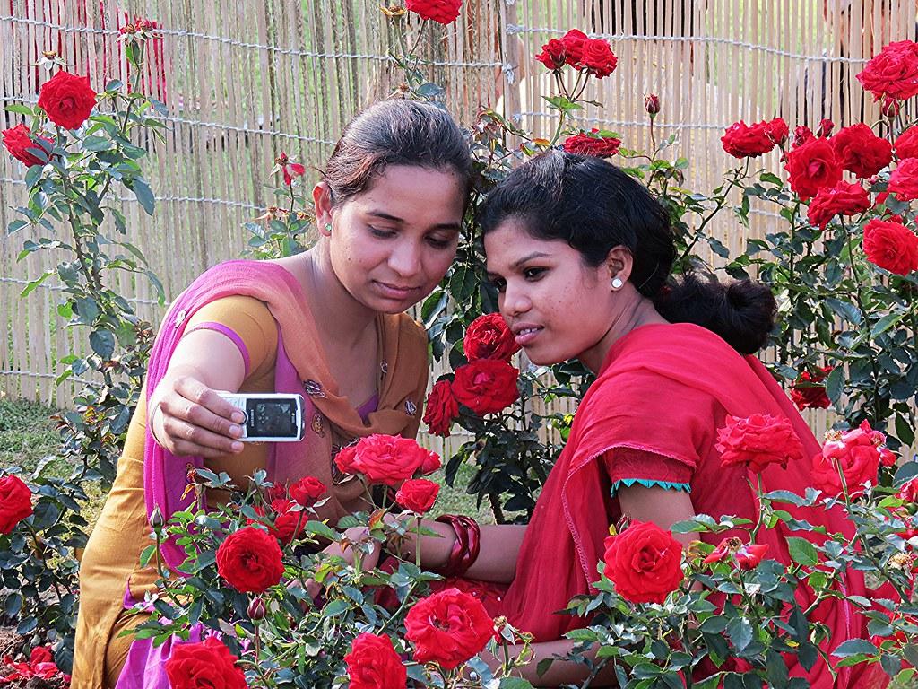 Rose Festival 2013 At Zakir Hussain Rose Garden Chandigarh Flickr