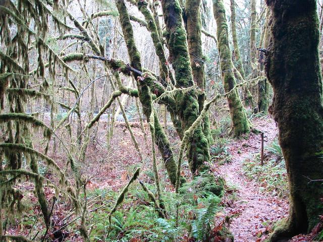 Alsea Falls Trail