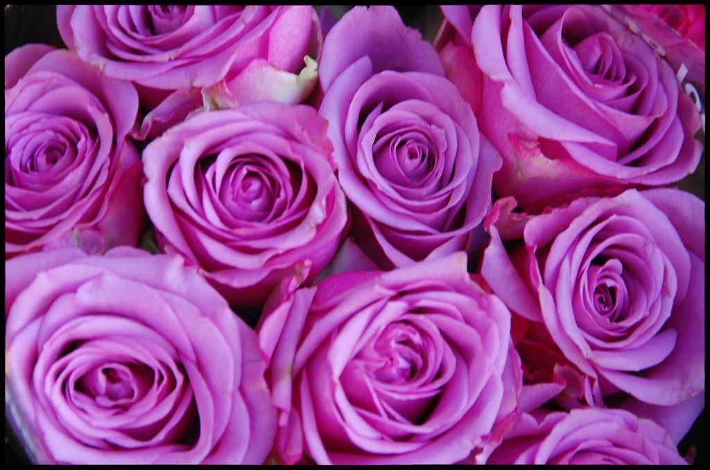 Wunsche Allen Flickr Freunden Einen Schonen Valentinstag Flickr