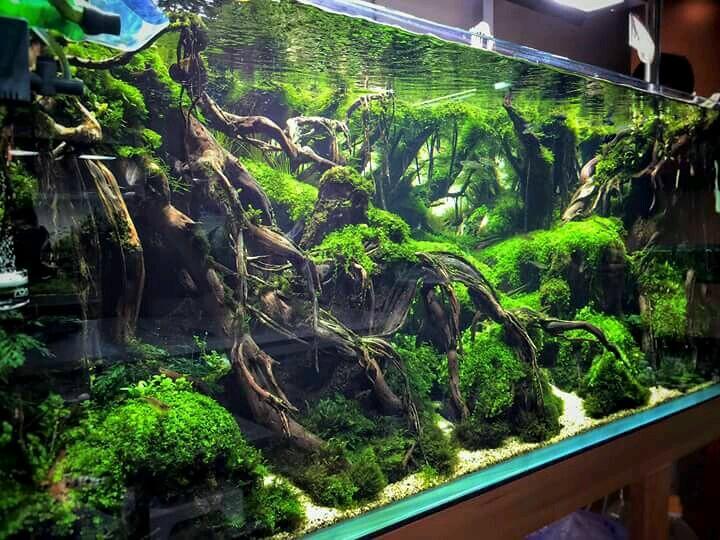 tree roots aqua scape driftwood aquarium design ...