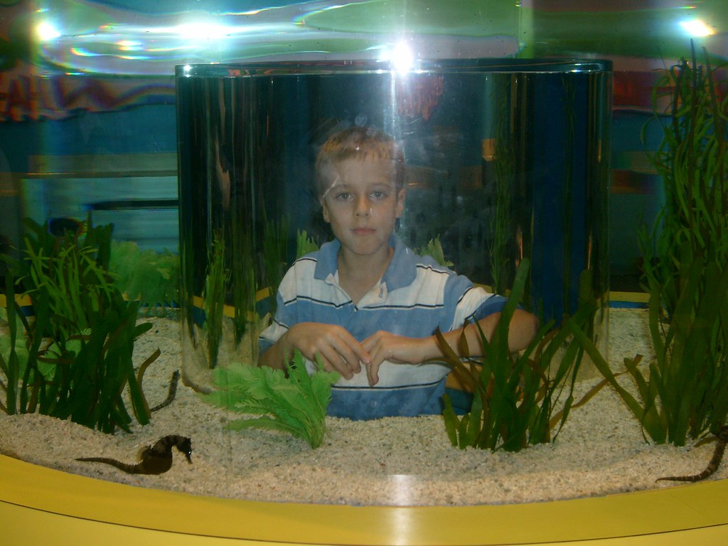 Cool fish tank this is a really cool fish tank ripley 39 s - Pictures of cool fish tanks ...