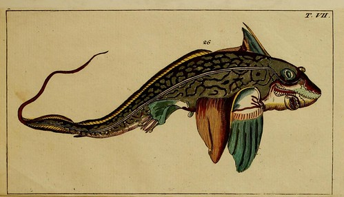 n124_w1150 | by BioDivLibrary