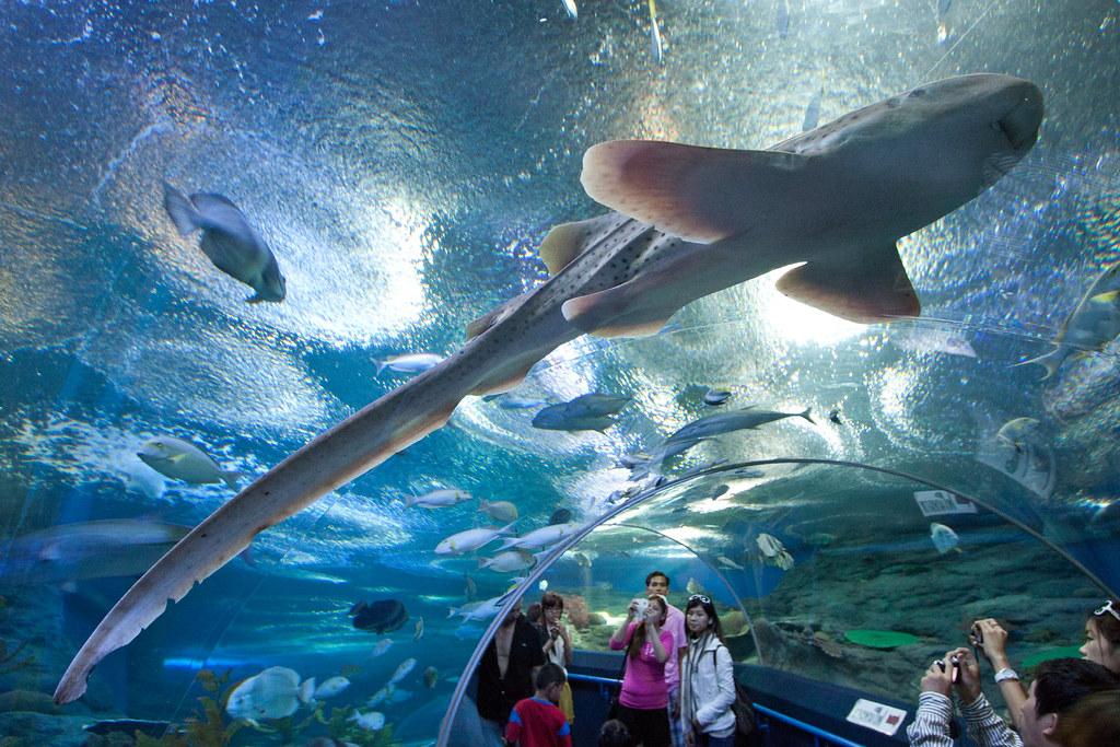 Underwater World Pattaya An aquarium at Pattaya which wasn ...
