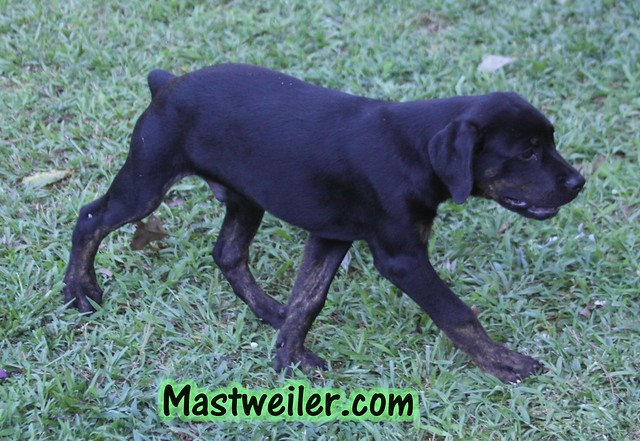 Emma & Twister, 3 Pups Available (2 Girls, 1 Boy)