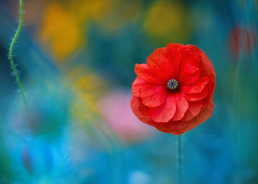 A Touch of Poppy Magic