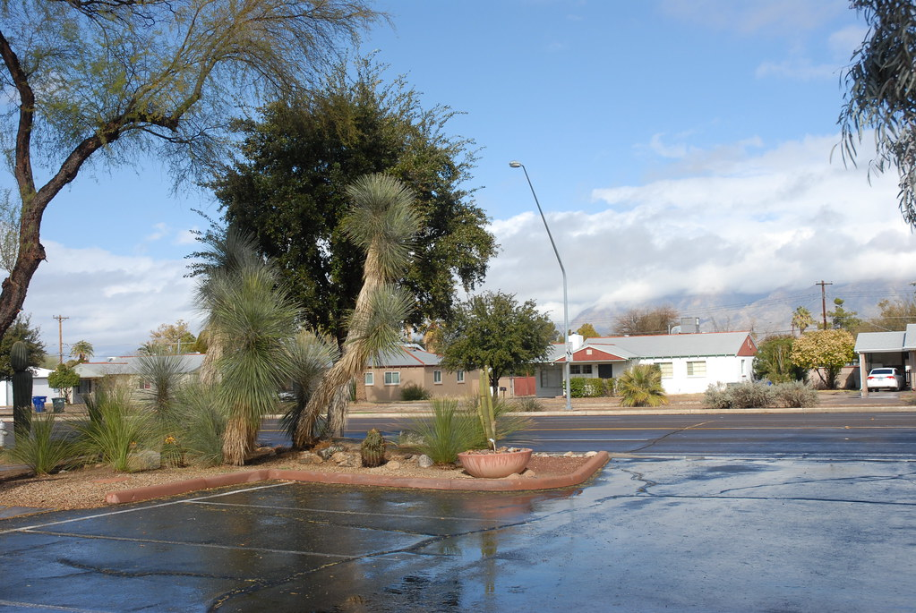 ... 20130128 Harlow Gardens On Pima In Tucson (22) | By Lasertrimman