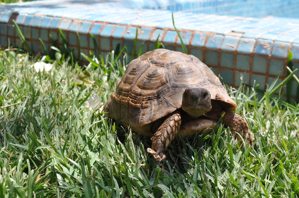 Image result for tortoise pet