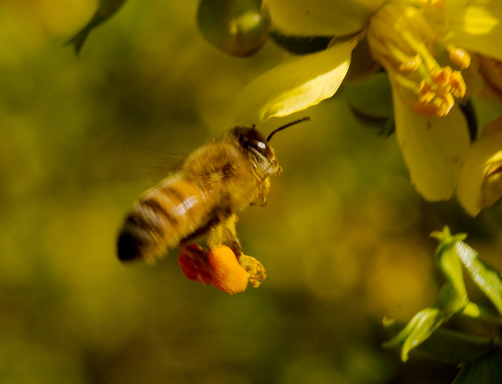 Bee_12