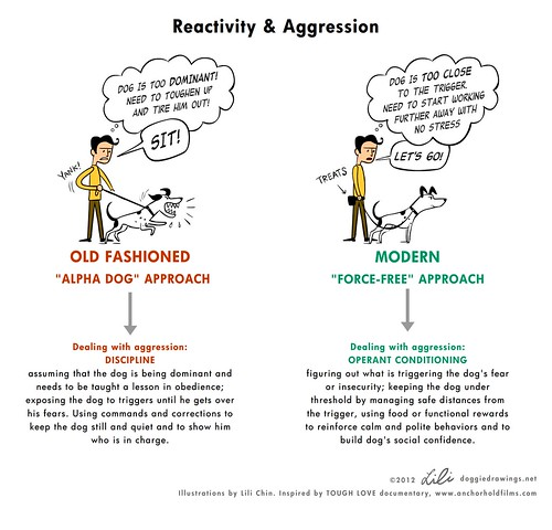 Image Result For Dog Aggression Training