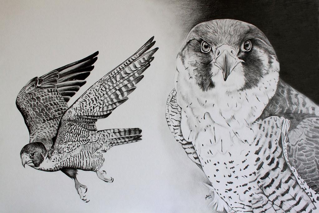 flying falcon drawing - 1024×682