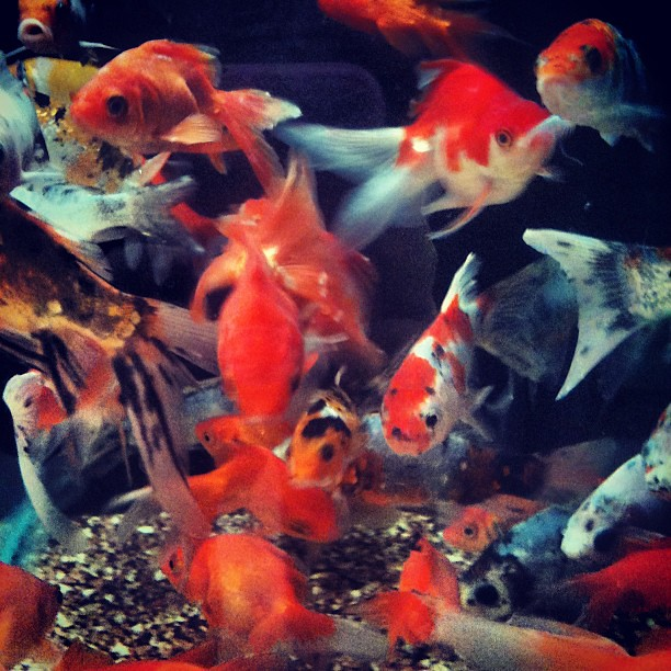 Cool pet fish to have