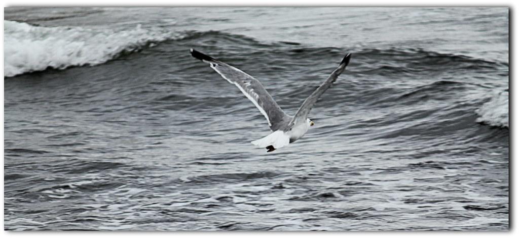 Liberi sono il vento con le onde lucio dalla liberi flickr - Quando si rompe uno specchio ...