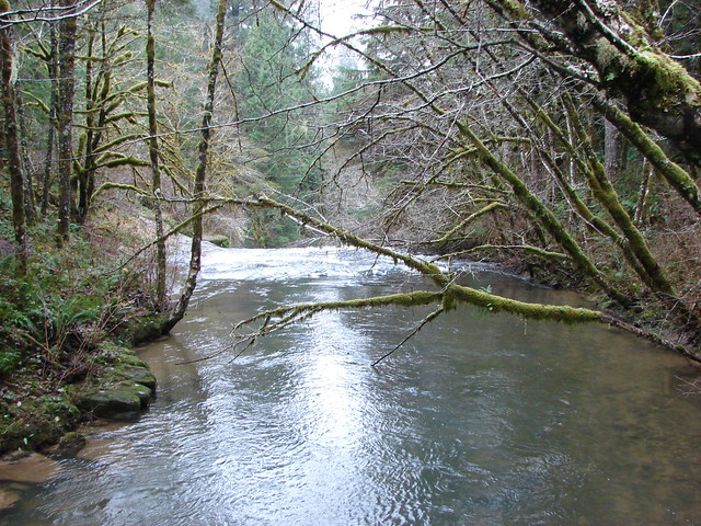 South Fork Alsea River