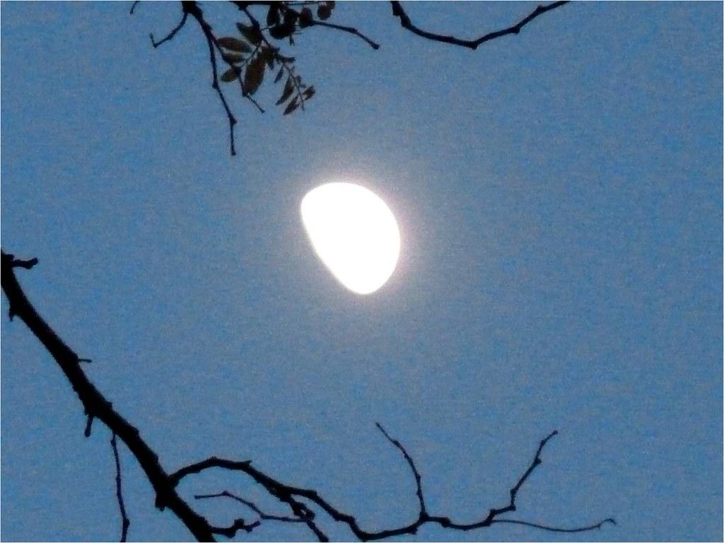 La luna el primer cuarto creciente de la primavera for Cuarto menguante de la luna
