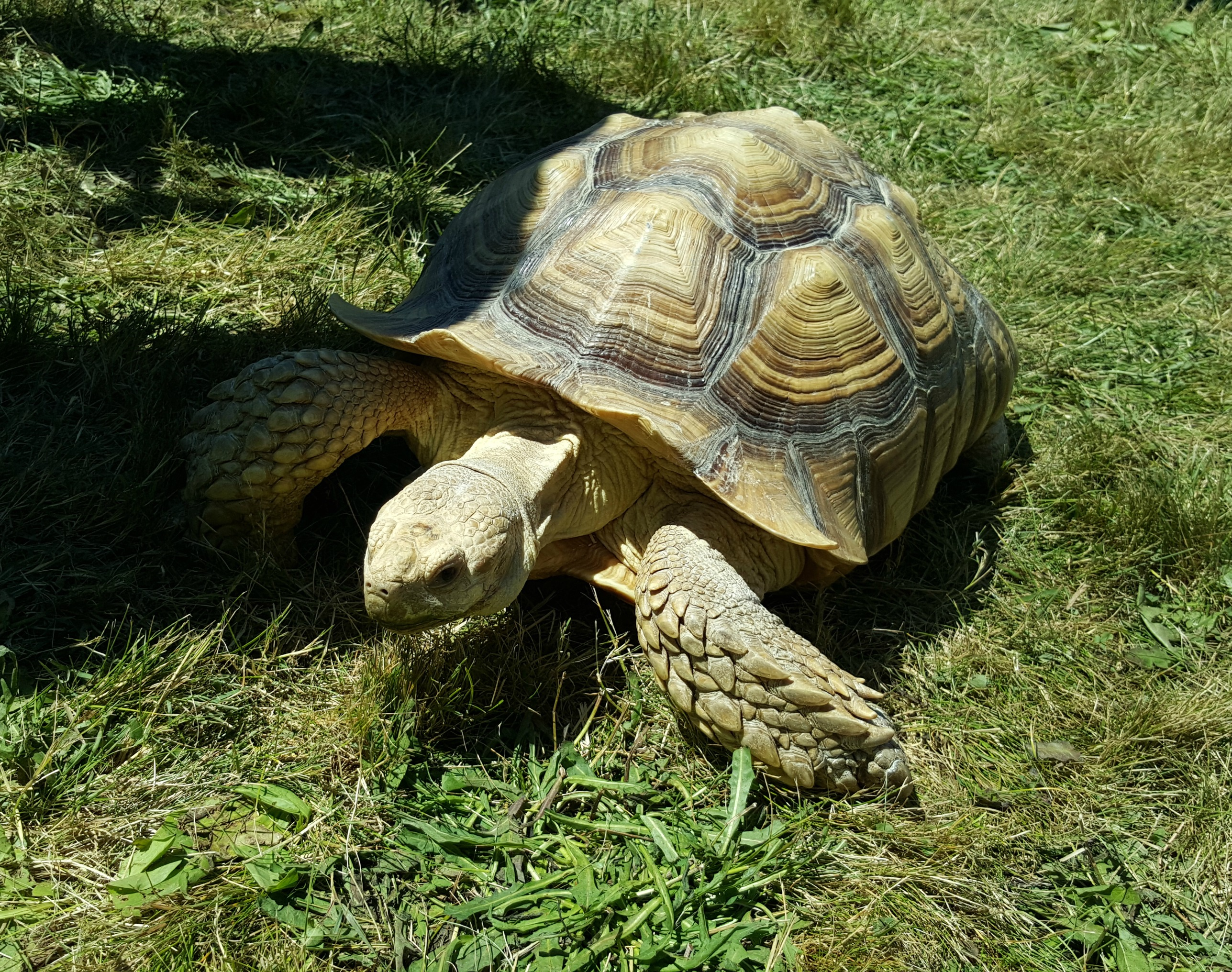 Turtle Sutton Fair 2016