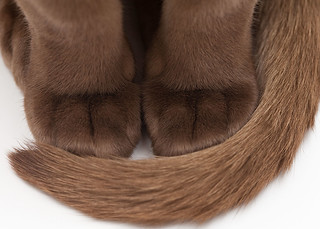 Paws for Thought... | by Lady Haddon