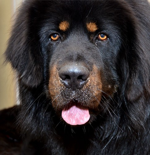 Pic Of A Big Black Dog