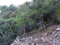 Sur l'ancien sentier à la traversée d'une petite clairière