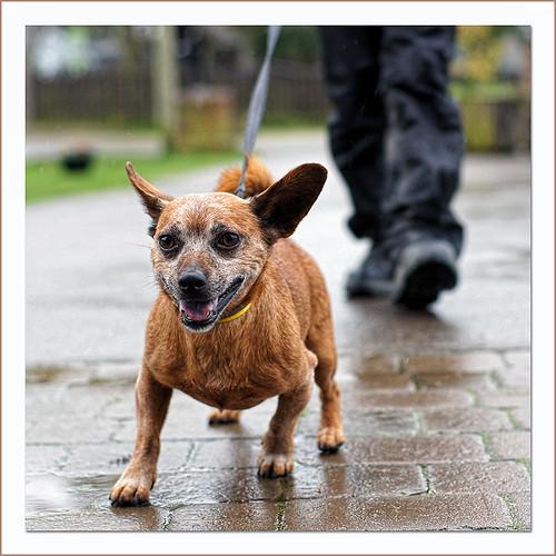 Dog Rescue Centre Bournemouth