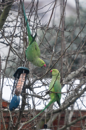 how to stop parakeets from fighting